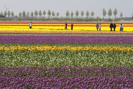 THE NETHERLANDS- APRIL 19TH 2009 -Tourists are walking through the colorful Dutch tulip fields which are a main tourist attraction in Holland Stock Photo - 8663455