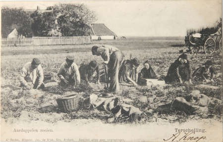 century: THE NETHERLANDS-CIRCA 1904-Historical postcard from 1904 with farmhands who are digging up potatoes on the isle of Terschelling in the Netherlands Editorial