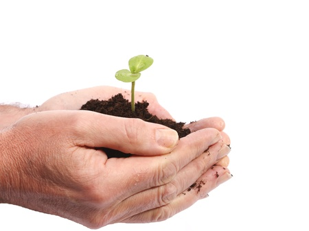 Sprout growing in earth in hands