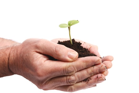 crop cultivation: Hands with growing sprout Stock Photo