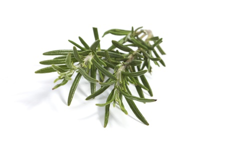 Close up of rosemary twigs photo