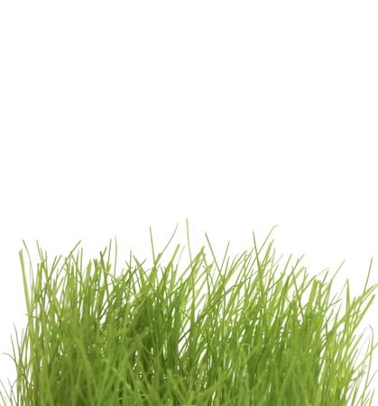 uncut: Verde erba non tagliato in close up Archivio Fotografico