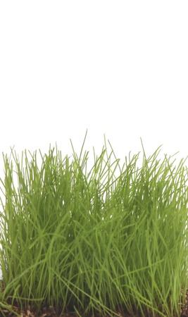 uncut: Erba verde uncut