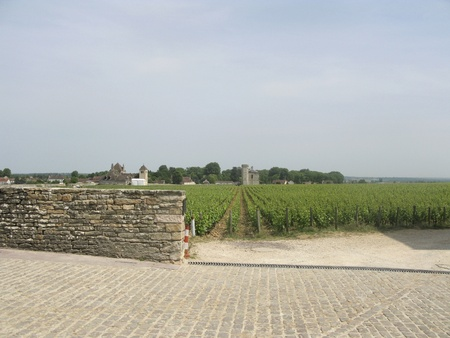 cote de nuits: Vineyards of the pinot noir near the famous wine village of Vougeot in France