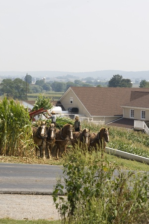 USA, LANCASTER-SEPTEMBER 4: Amish farmer and his son are processing corn the old fashioned way with horses on september 4, 2008
