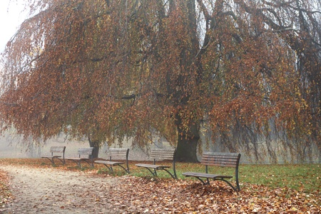 Willow with row of wooden benches in urban park in autumn colors