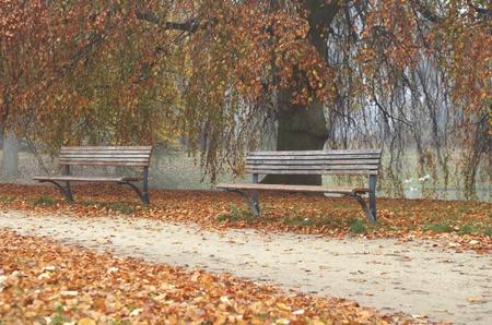 fagus grandifolia: Wooden benches in autumn  park Stock Photo