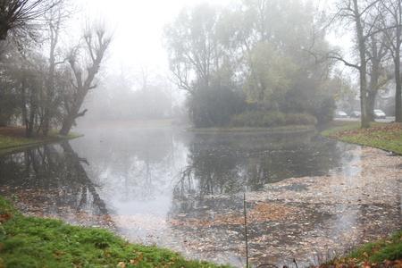 fagus grandifolia: Misty pond in urban park in fall