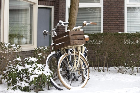 Two bikes parked against a tree in the snow photo
