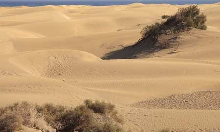 Dunes near the sea at Gran Canaria photo