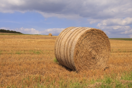 Harvested field with straw bales in summer  photo