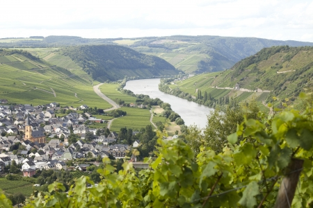 Vineyard and vilage on Mosel river. Focus on river photo