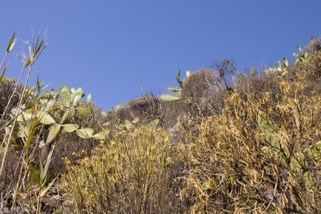 Dry and subtropical landscape with cactus and branches Stock Photo - 15730032