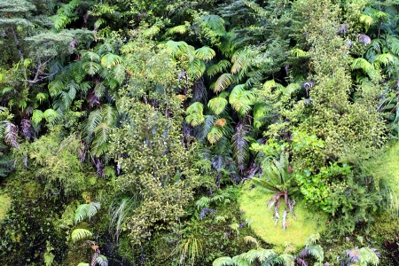 subtropics: Plants and trees in a subtropical forest