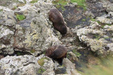 Two fur seals on the rocks Stock Photo - 16188300