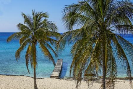 maria: Caribbean beach  with palm trees