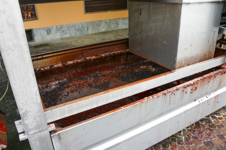 filtering: Grapes in a filtering machine at a winemaker in Italy