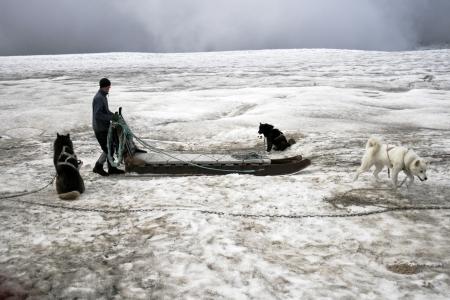 sled dog: ICELAND-AUG 12: Dogsledding on a glacier in Iceland on Aug 12, 2007. Dog sledding is a fun tourist attraction in Iceland. In the summer dogsledding is done at the Langjökull glacier in South Iceland.