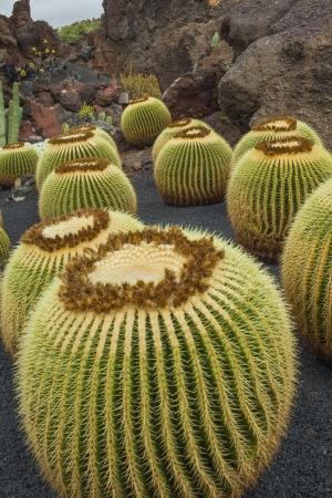 manrique: The Jardin de Cactus, Lanzarote, designed by Cesar Manrique  Stock Photo