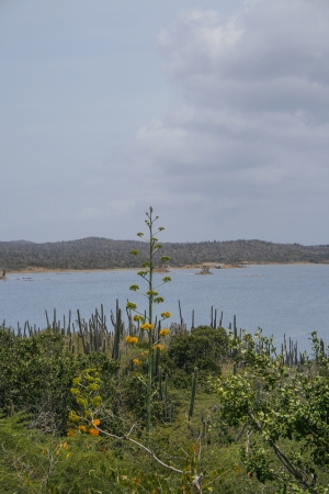 bonaire: Ocean and plants on coastline of Bonaire