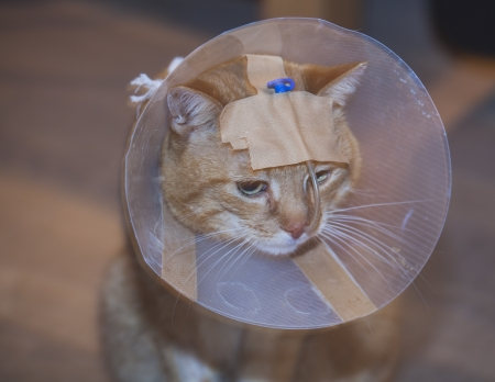 Sick cat in a cone with tube photo