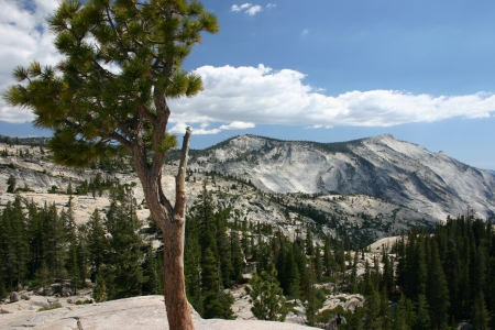 Beautiful white mountain in Yosemite National Park photo