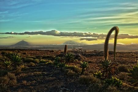 lanzarote: Volcanic landscape with cactuses, Lanzarote Island, Spain