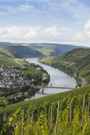 mosel: Beautiful Mosel valley with vineyards in Germany