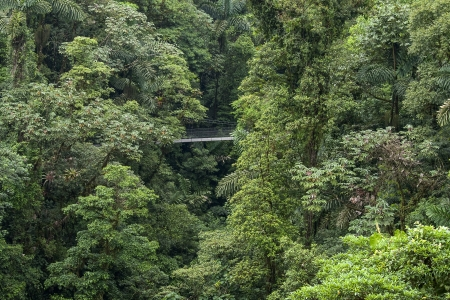 suspension: Rainforest in Costa Rica with hanging bridge Stock Photo