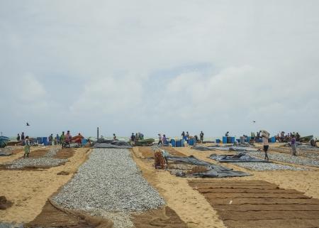 NEGOMBO, SRI LANKA-AUG 12  Drying fish on the sandy seashore in Negombo on august 12, 2013