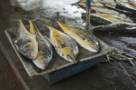 tiddler: Stand with yellow tuna on famous fish market, Negombo, Sri Lanka