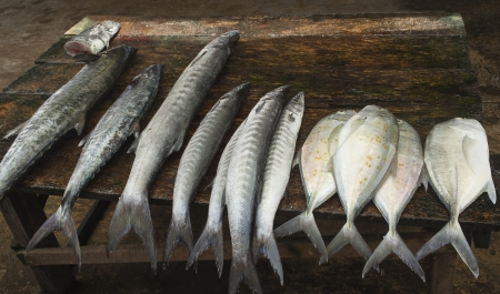 tiddler: Table with fish on famous fish market, Negombo, Sri Lanka Stock Photo