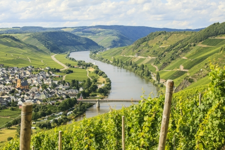 mosel: Mosel vineyards with view on the river