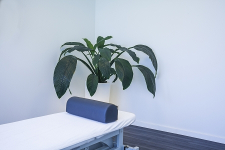 wellness center: Empty white room in physiotherapy clinic with green plant