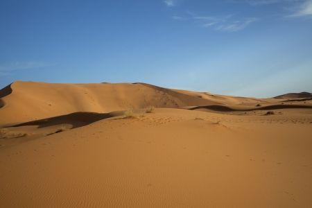 Sand dunes in the Sahara photo