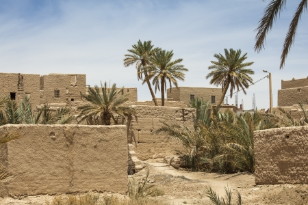 date palm tree: Oasis with date palms and houses of clay, Morocco landscape near Zaouizt sidi ali   Stock Photo
