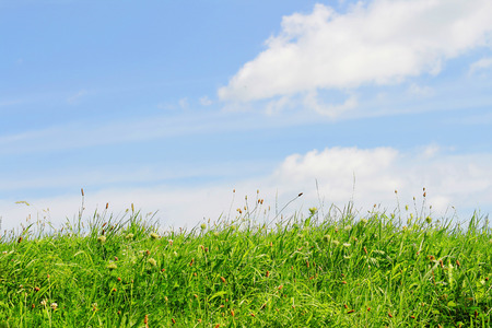 two and two thirds: Green grass and blue sky with white clouds  One third grass, two thirds sky