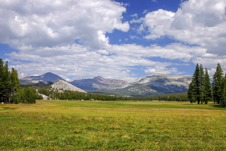 abundant: Beautiful plains in Yosemite National Park on a summer day Stock Photo