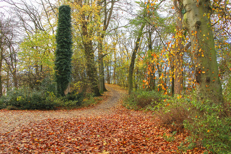 fagus grandifolia: Path in Fall park