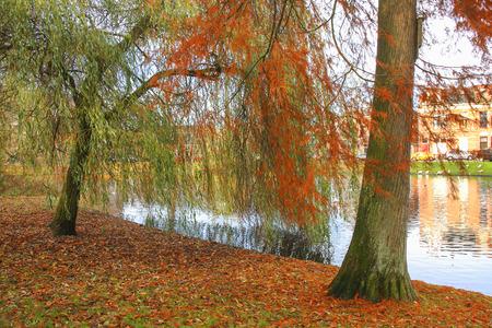 fagus grandifolia: Red foliage in the park Stock Photo