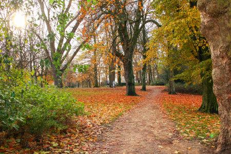 fagus grandifolia: THE NETHERLANDS-NOVEMBER 16: Boys jogging in fall Noorderplantsoen in Groningen,