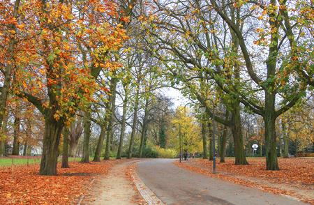fagus grandifolia: Road throught park in the fall