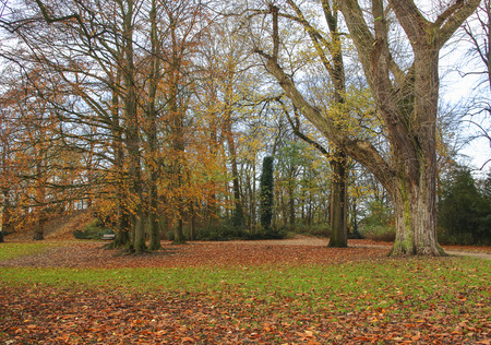 fagus grandifolia: Park with trees  in fall colors