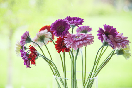 naturally: Daisy flower gerbera bouquet in a vase on a light green background   Stock Photo