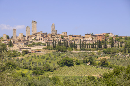 San Gigmignano and its vineyards with the famous vernaccia grapes photo