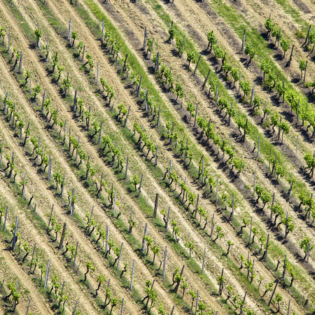 High angle view of a vineyard in the Chianti in Italy photo