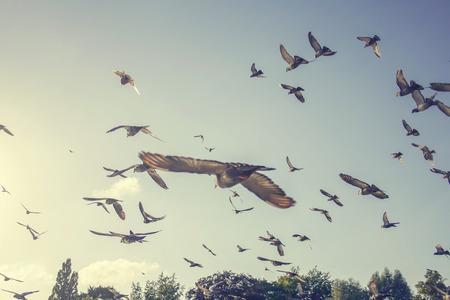 kudde van duiven vliegen in de lucht weg van kijker