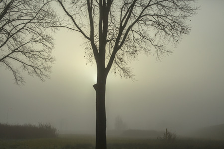 background settings: Tree against the sun on a winters day in the fog Stock Photo