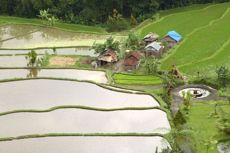 Rice Field Stock Photo - 2067454