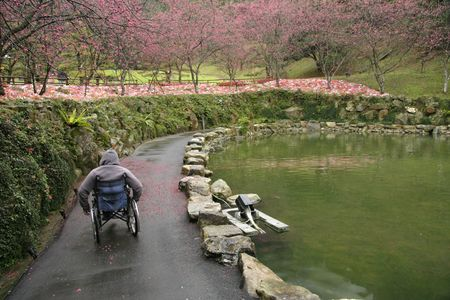 A beautiful shot of a garden full of flowers with a man in a wheelchair. Taken in Taiwan. photo